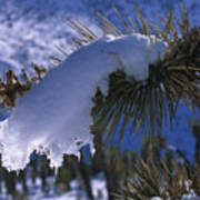 Snow Ornament - Joshua Tree Art Print