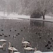 Snow Over Swan Lake Art Print