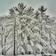 Snow Trees  Hdr Art Print