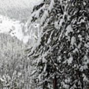 Snow, Trees, Yellowstone Art Print