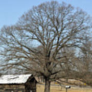 Snowcapped Tobacco Shed Art Print