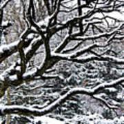 Snowfall And Tree Art Print
