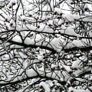 Snowfall On Branches Art Print