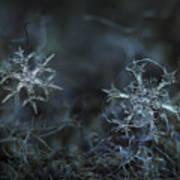 Snowflake Photo - When Winters Meets - 2 Art Print by Alexey Kljatov