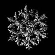 Snowflake Vector - Gardener's Dream Black Version Art Print by Alexey Kljatov