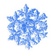 Snowflake Vector - Gardener's Dream White Version Art Print
