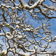 Snowy Branches Art Print