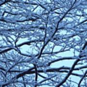 Snowy Branches Landscape Photograph Art Print