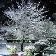 Snowy Dogwood Tree At Night Art Print