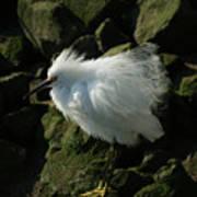 Snowy Egret Fluffy Art Print