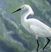 Snowy Egret In Water Art Print