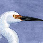 Snowy Egret Portrait Art Print