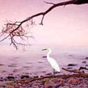 Snowy Egret Solitude Art Print