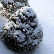 Snowy Morn Art Print