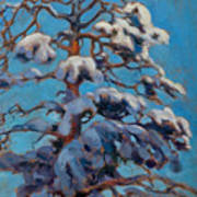 Snowy Pine-tree Art Print