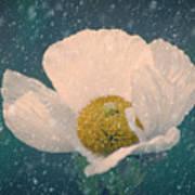 Snowy Poppy Art Print