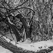 Snowy Tree Bench In Black And White Art Print