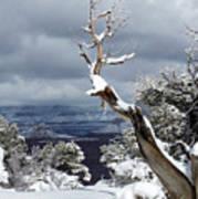 Snowy View Art Print