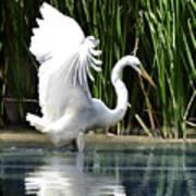 Snowy White Egret In The Wetlands Art Print
