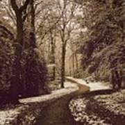 Snowy Woodland Walk One Art Print