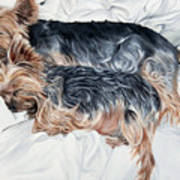 Snuggling Yorkies Art Print