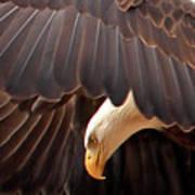 Soar Like An Eagle Art Print