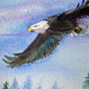 Soaring Eagle Art Print