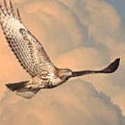 Soaring Hawk Art Print by Wingsdomain Art and Photography