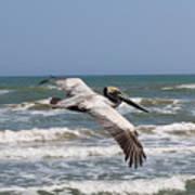 Soaring Pelican  Art Print