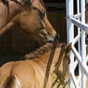 Socializing Amongst Horses Art Print