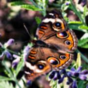 Soft Butterfly Art Print