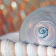 Soft Colored Shells Art Print