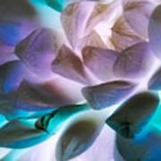 Soft Glow Succulents Art Print