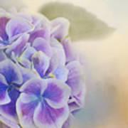 Soft Hydrangeas On Peach Art Print