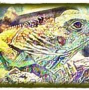 Soft Iguana Art Print