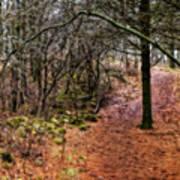 Soft Light In The Woods Art Print