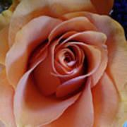 Soft Peach Rose Art Print