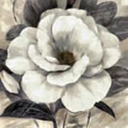 Soft Petals I Art Print