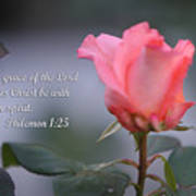 Soft Pink Rose With Scripture Art Print