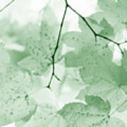 Softness Of Green Leaves Art Print