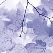 Softness Of Lavender Leaves Art Print