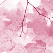 Softness Of Pink Leaves Art Print