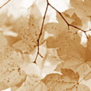 Softness Of Rusty Brown Leaves Art Print