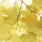 Softness Of Yellow Leaves Art Print