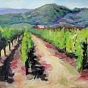Solano Vineyards Art Print