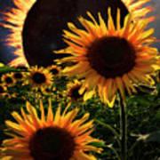 Solar Corona Over The Sunflowers Art Print