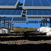 Solar Panels In Connecticut  Art Print