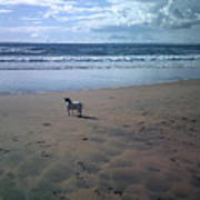 Solitary Doglooking To America Art Print