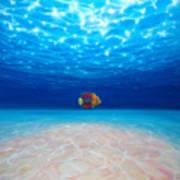 Solo Under The Sea Art Print