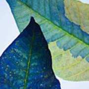 Something Blue Art Print by Bobby Villapando
